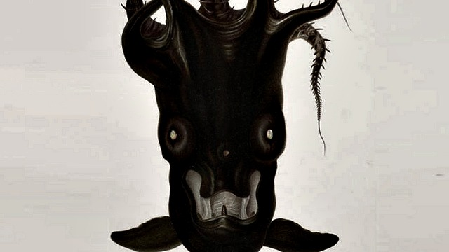 Vampire_squid