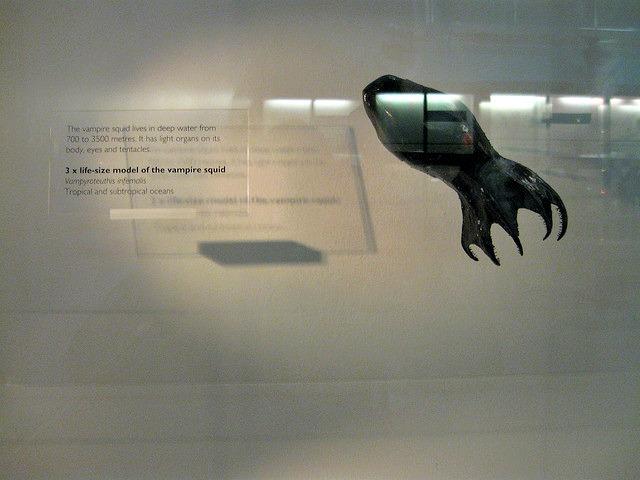 Vampire_squid_model_Natural_History_Museum