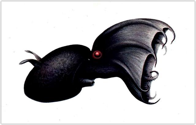 Vampyroteuthis_illustration