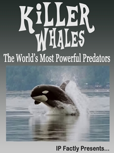 Killer Whales! The World's Most Powerful Predators!