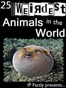 25 Weirdest Animals Facts