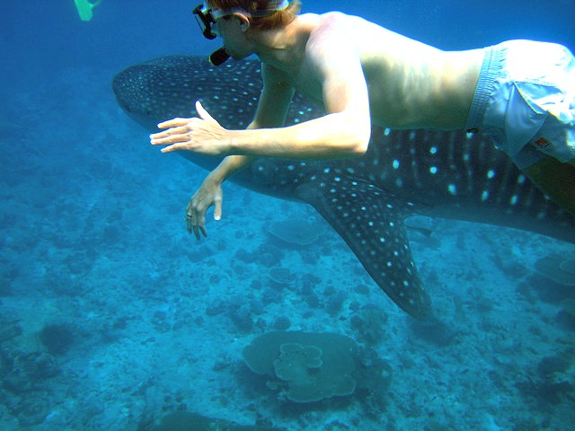 Diving_with_Whale_shark