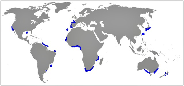 Goblin_shark_Mitsukurina_owstoni_distribution_map