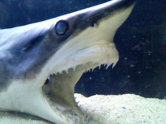 Mako_Shark_Attack
