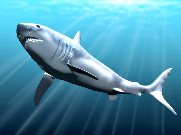 megalodon facts questions and answers fun facts you