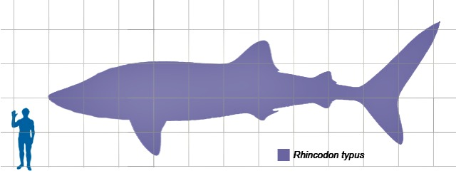 Whaleshark_scale