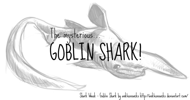shark_week_goblin_shark_by_enymy