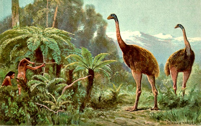 Moa_Extinct