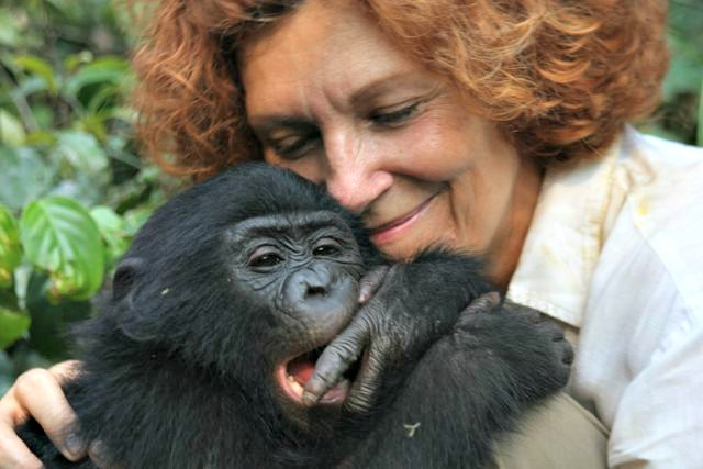 Claudine_andre and young bonobo