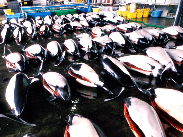 Dall's porpoise at market in Japan