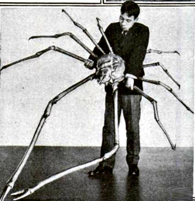 Japanese_spider_crab