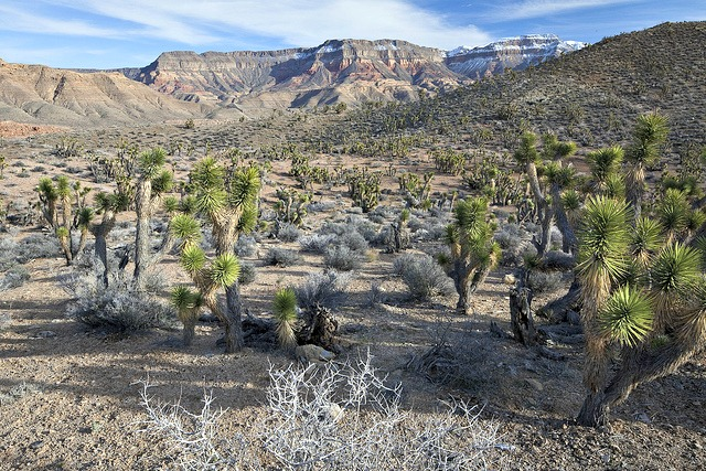 Paiute Wilderness