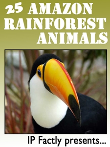 25 Amazon Rainforest Animals