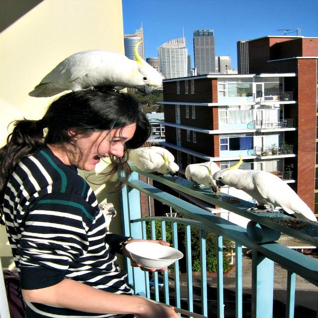 cockatoos as pets