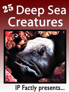 25 Deep Sea Creatures.