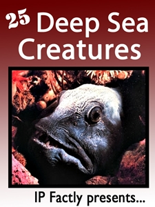 25 Deep Sea Creatures.