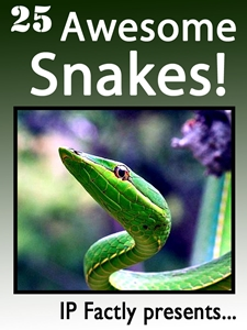 25 Awesome Snakes!
