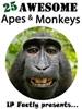 25 Apes and Monkeys