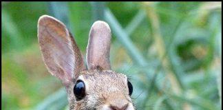 04-Rabbit_Looks_Surprised_by_Monique_Haen