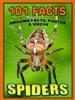 101 Spider Facts