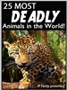 25 Most Deadly Animals in the World
