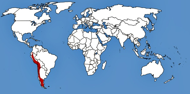 Pseudalopex_culpaeus_map