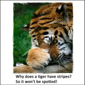 Tiger Joke