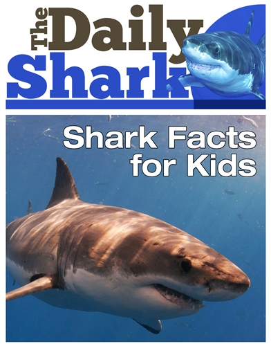 The Daily Shark - Shark Facts