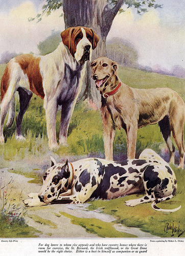 Painted by Robert L. Dickey for an article in the January 1922 issue of Country Life (by Don O'Brien cc2.0)