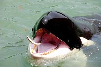 Taiji Whale Museum.