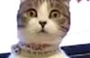 Dramatic cat dr watson