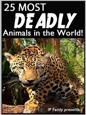 Top 15 Most Dangerous Animals in the Amazon Rainforest