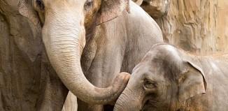 Elephants-OregonZoo