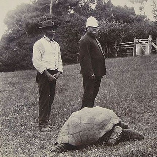 Jonathan-the-tortoise-1900