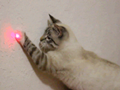 cat and laser