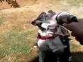 dog and a hose
