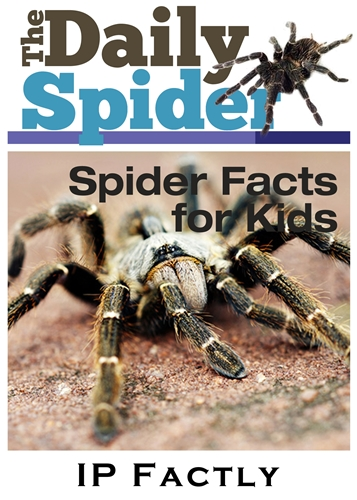The Daily Spider - Facts