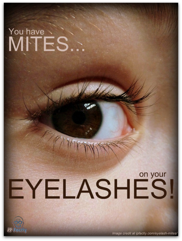 You Have Mites On Your Eyelashes Fun Facts You Need To Know