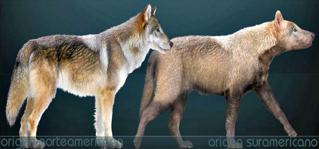 Extinct american animals