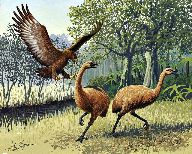 Giant-Haasts-eagle-attacking-New-Zealand-moa