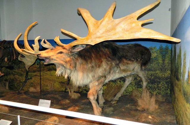 Giant_deer