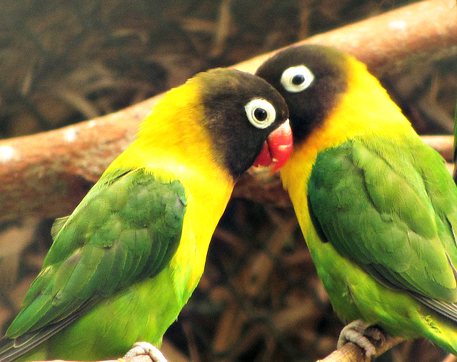 Top 10 Fun Facts About Parrots | Fun Facts You Need to Know!