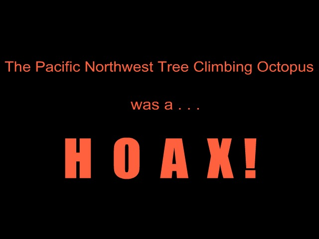 The Pacific Northwest tree climbing octopus was a hoax