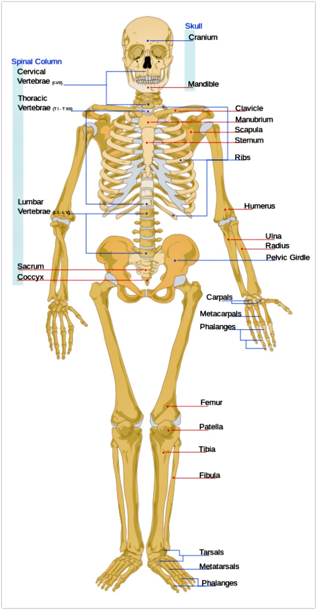 Link #40: Human Bone Is Five Times Stronger Than Steel! | Fun Facts ...