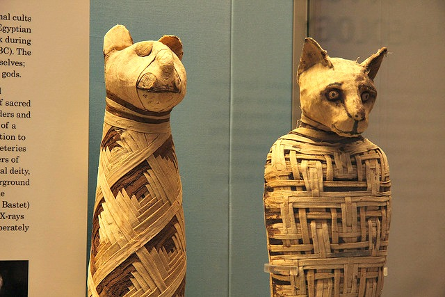 Mummified cats ancient egypt