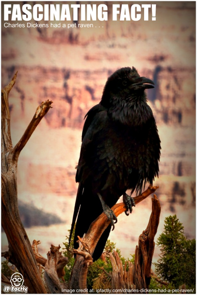 Charles Dickens Had A Pet Raven Always Learning