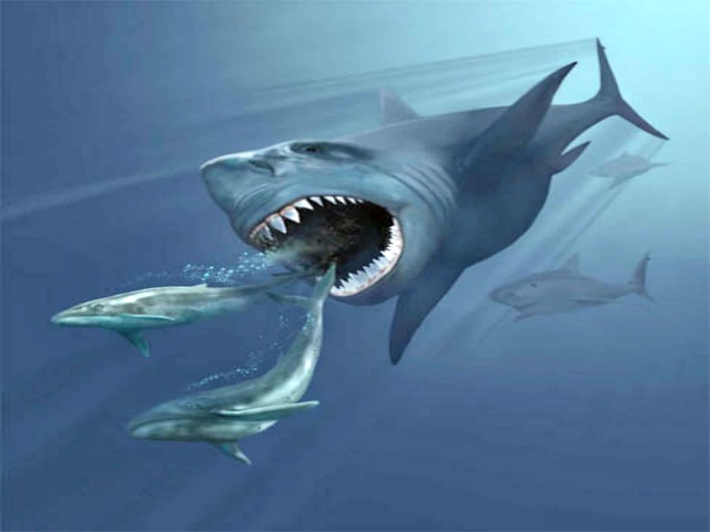 megalodon quiz always learning