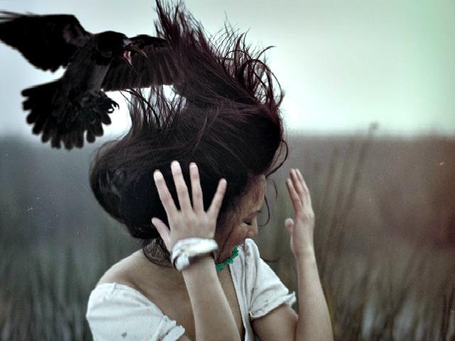 Mobbing_crow