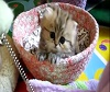 Sweet Kittens - CUTE Video EVER