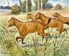 prehistoric_horses_Mesohippus